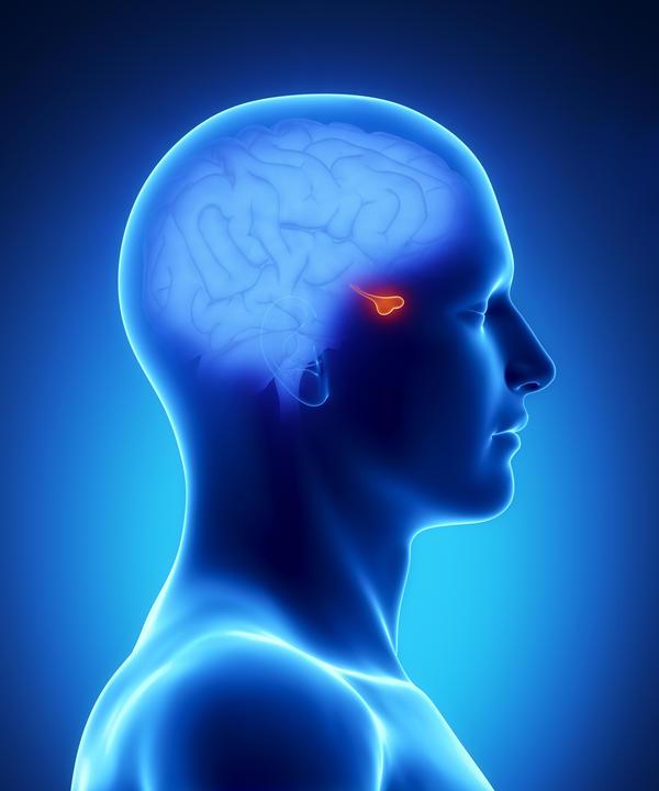 Pituitary Gland - Dr Howard Zeimer
